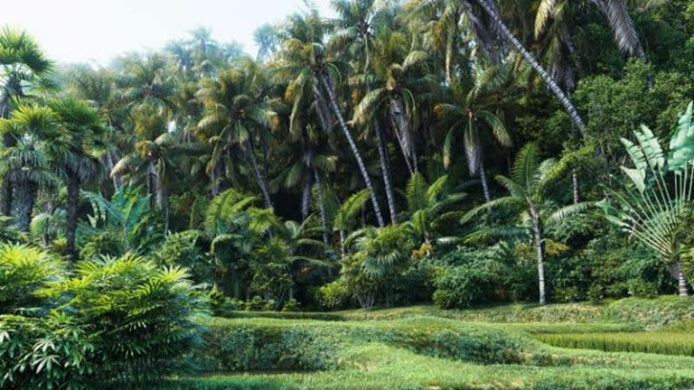 Maxtree release new collection of high quality palm trees